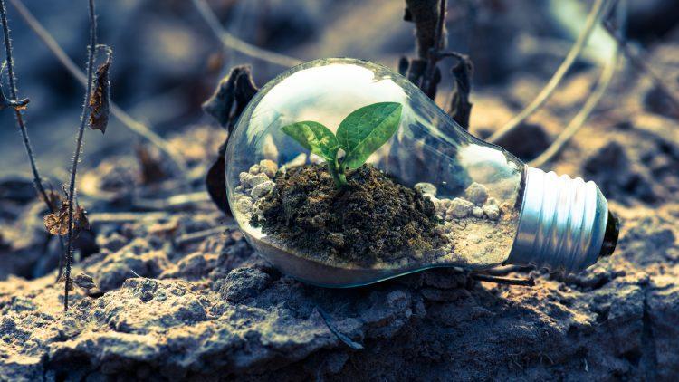 Educação ambiental: entenda por que é necessário saber.